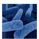 クロストリジウム・ディフィシル感染症の管理